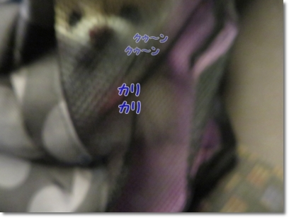 b0167519_17242547.jpg