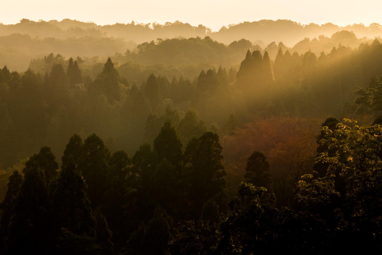 雨上がりの森(夕景)_c0220824_09391310.jpg