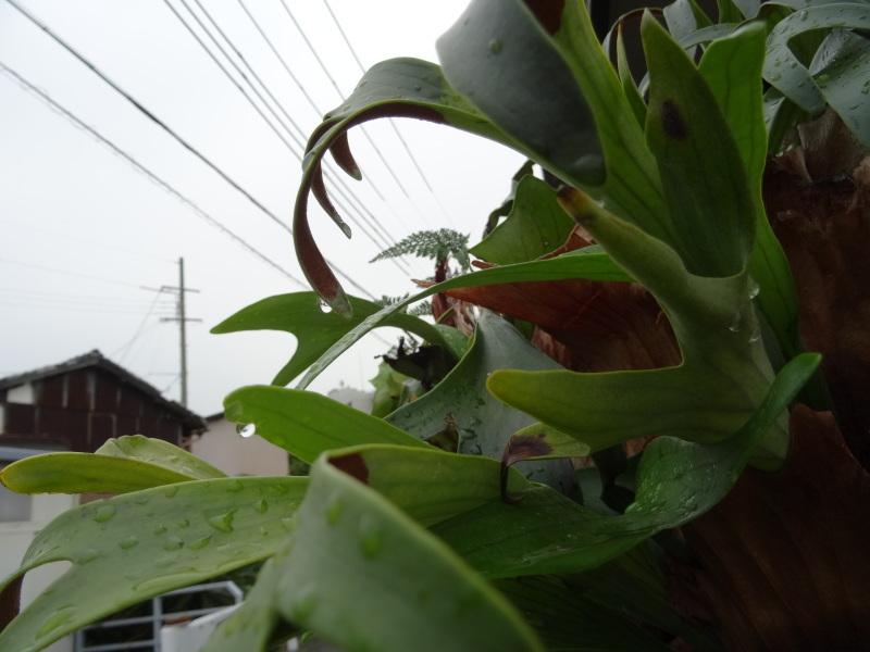 また雨だ!休養日だ!_c0108460_14450455.jpg