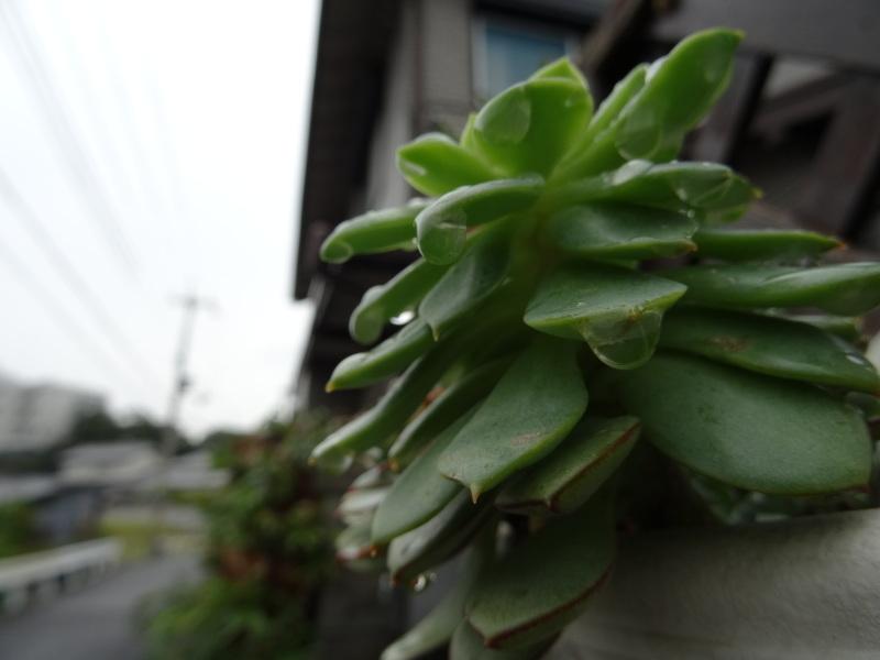 また雨だ!休養日だ!_c0108460_14461305.jpg
