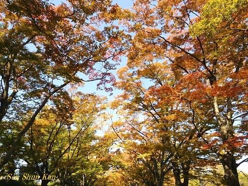 植物園のケヤキ並木   2017年10月27日_a0164068_13215411.jpg