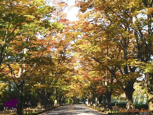 植物園のケヤキ並木   2017年10月27日_a0164068_13215445.jpg