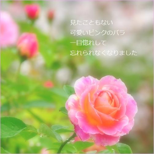 b0154475_20462685.jpg