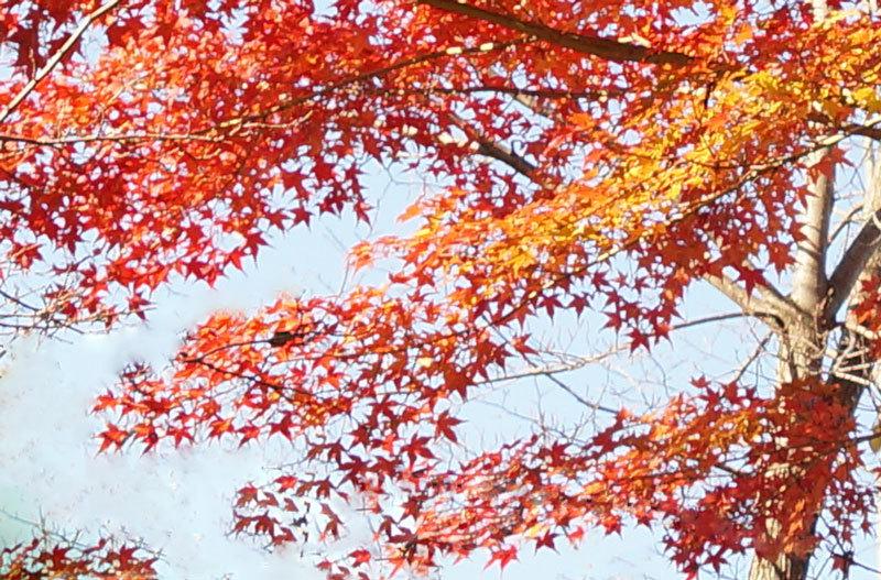 紅葉_d0162994_16270340.jpg