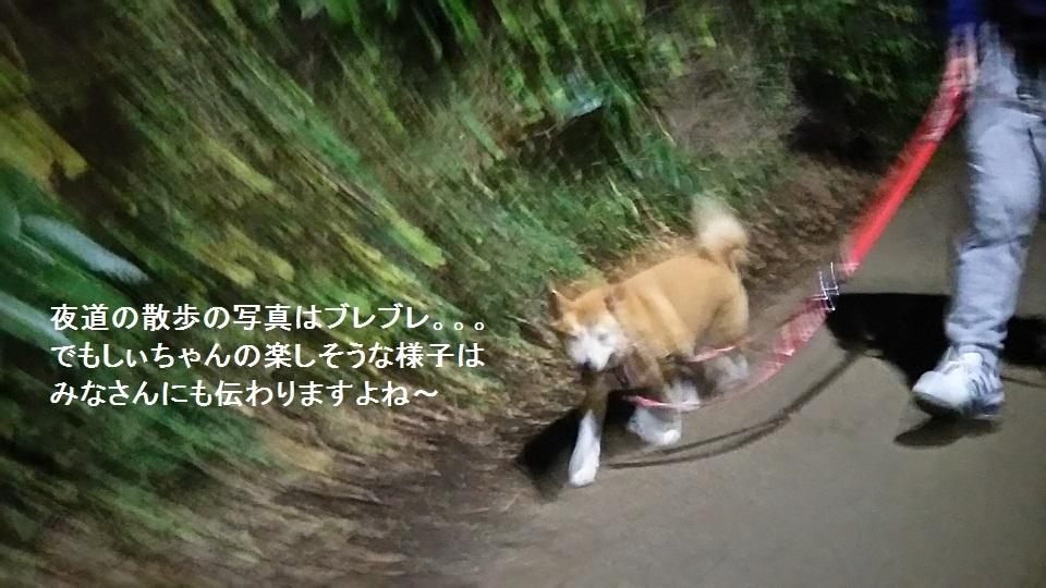 しぃちゃん しじみ家へ_f0242002_16100705.jpg