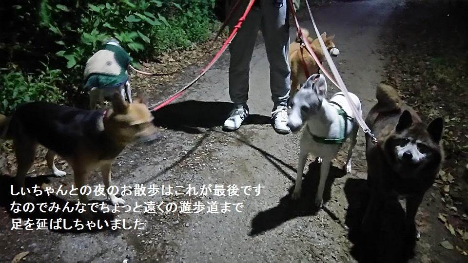 しぃちゃん しじみ家へ_f0242002_16101284.jpg