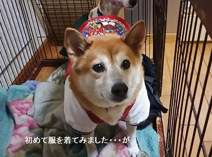 しぃちゃん しじみ家へ_f0242002_16103131.jpg