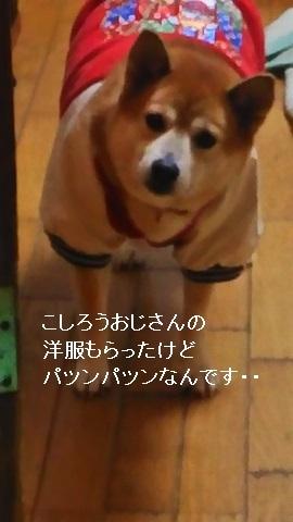 しぃちゃん しじみ家へ_f0242002_16103675.jpg