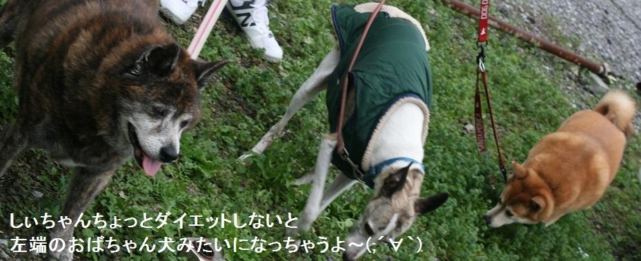 しぃちゃん しじみ家へ_f0242002_16105766.jpg