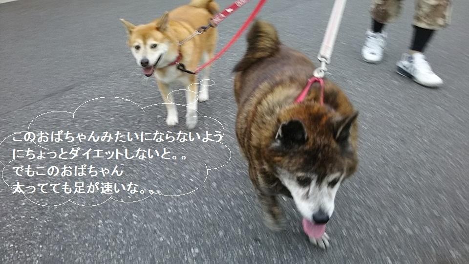 しぃちゃん しじみ家へ_f0242002_16110421.jpg