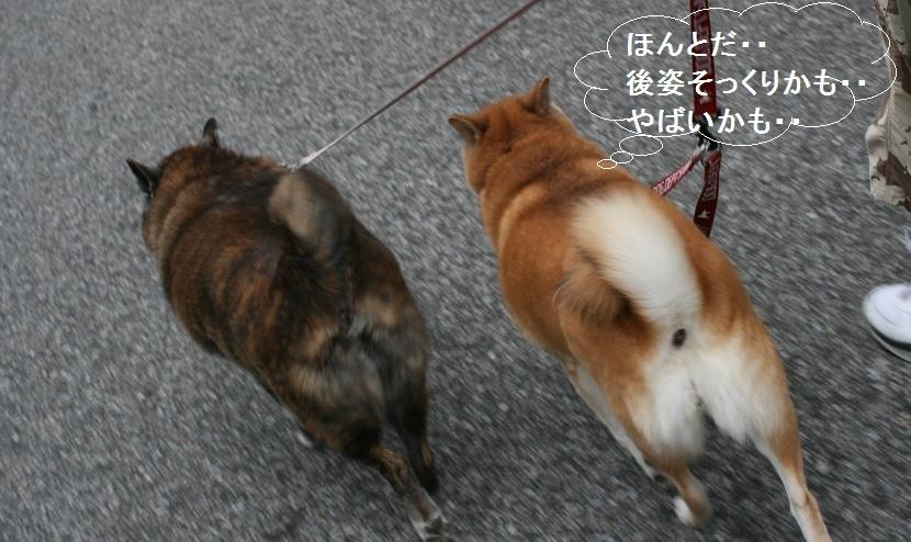 しぃちゃん しじみ家へ_f0242002_16110919.jpg