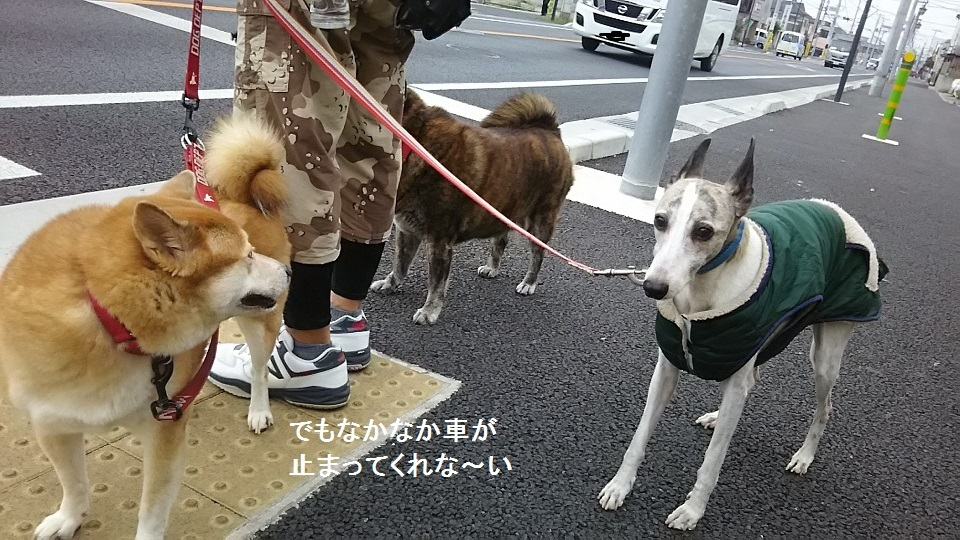 しぃちゃん しじみ家へ_f0242002_16174058.jpg