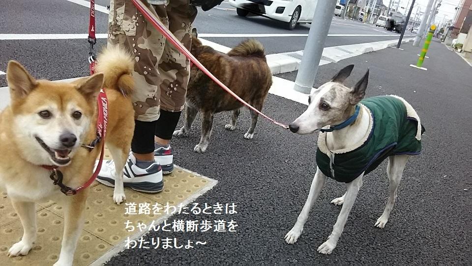 しぃちゃん しじみ家へ_f0242002_16174974.jpg