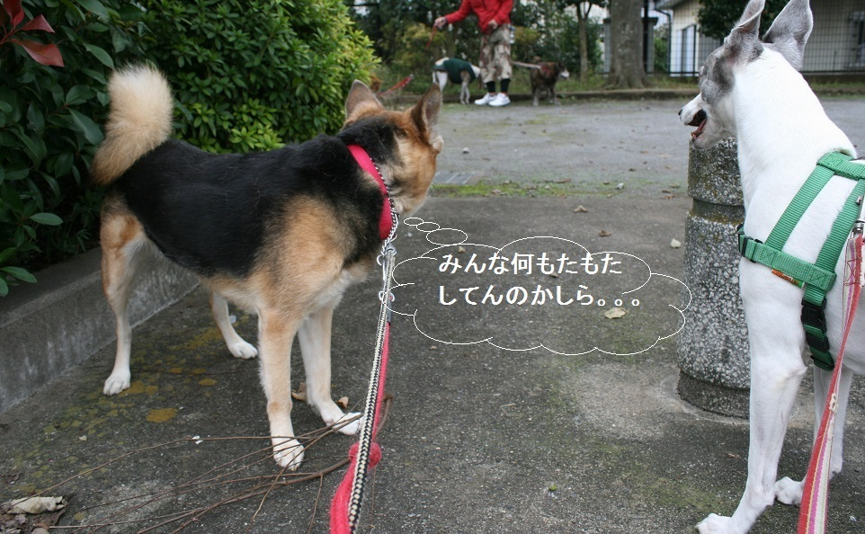 しぃちゃん しじみ家へ_f0242002_16180935.jpg