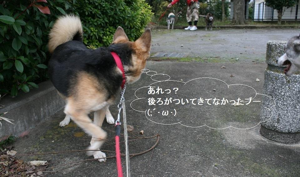 しぃちゃん しじみ家へ_f0242002_16181573.jpg