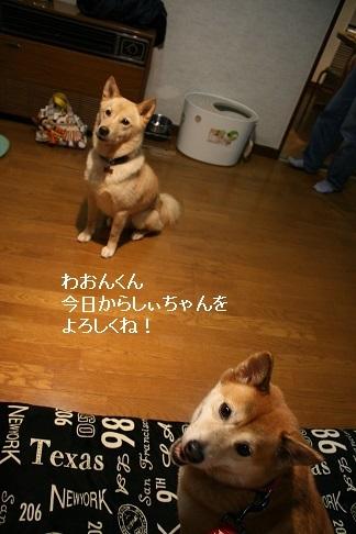 しぃちゃん しじみ家へ_f0242002_16183755.jpg