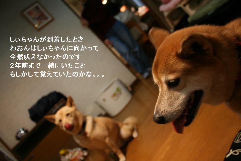 しぃちゃん しじみ家へ_f0242002_16184377.jpg