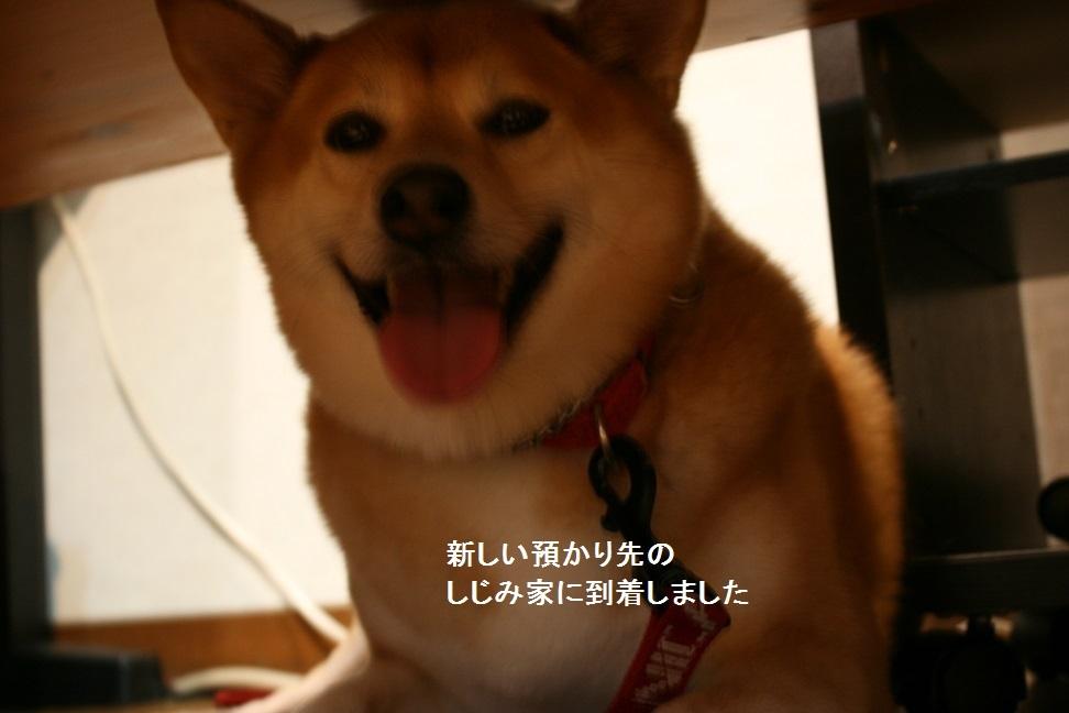 しぃちゃん しじみ家へ_f0242002_16230028.jpg