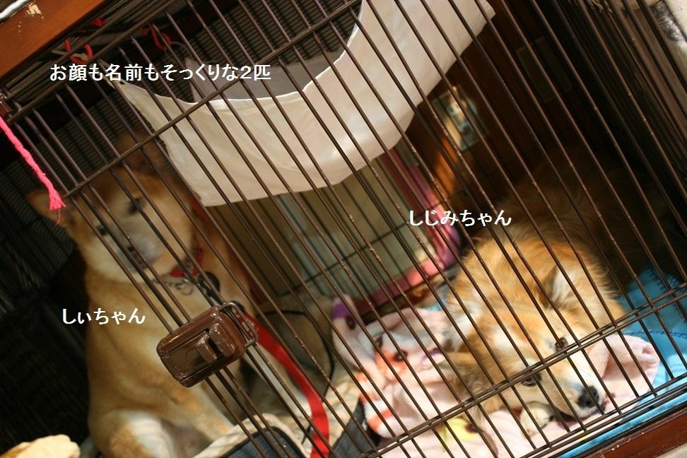 しぃちゃん しじみ家へ_f0242002_16230713.jpg