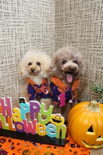 10月27日にご来店のわんちゃんです!!_b0130018_19591268.jpg