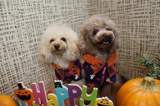 10月27日にご来店のわんちゃんです!!_b0130018_19591539.jpg