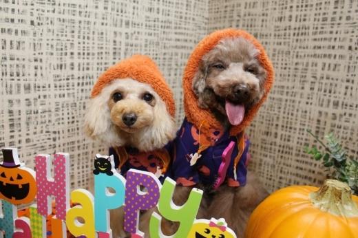 10月27日にご来店のわんちゃんです!!_b0130018_19591886.jpg