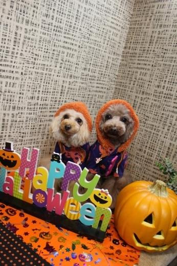 10月27日にご来店のわんちゃんです!!_b0130018_19592334.jpg