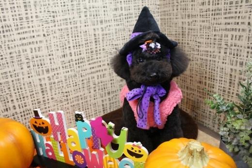 10月27日にご来店のわんちゃんです!!_b0130018_20035523.jpg