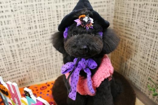 10月27日にご来店のわんちゃんです!!_b0130018_20035704.jpg