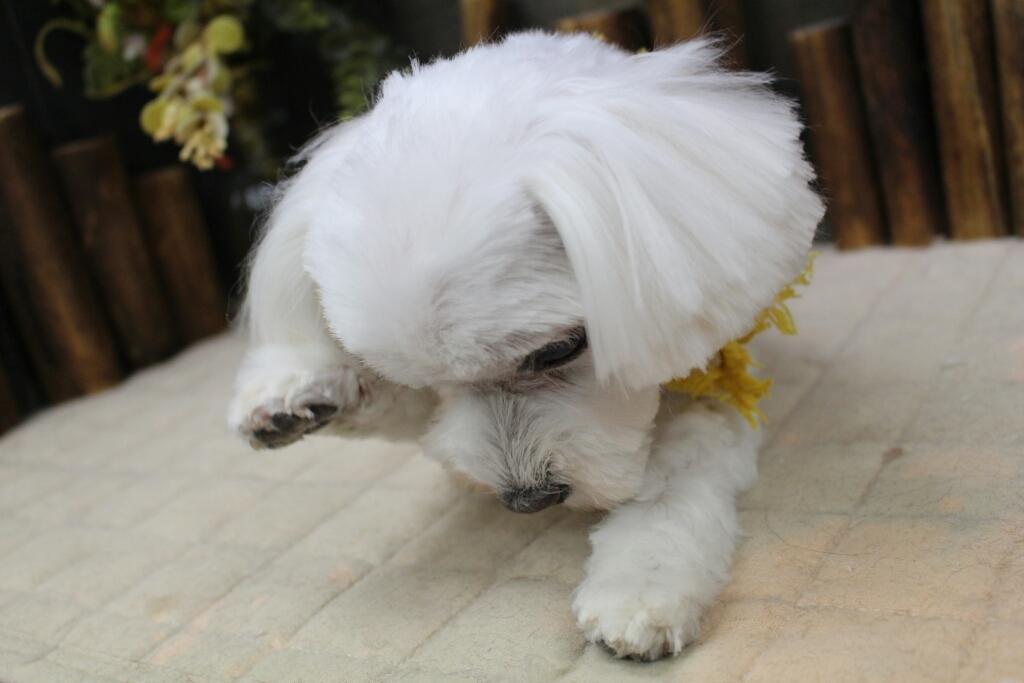 10月27日にご来店のわんちゃんです!!_b0130018_20112180.jpg