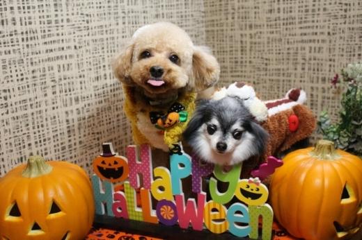 10月25日ご来店のわんちゃんです!!_b0130018_21231143.jpg