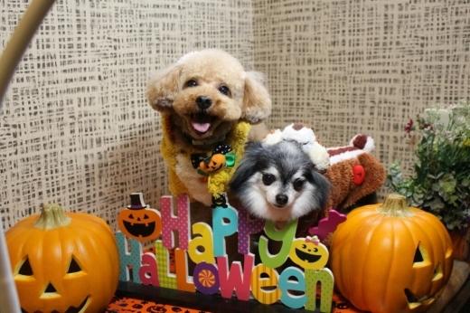 10月25日ご来店のわんちゃんです!!_b0130018_21242445.jpg