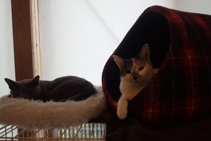 猫居ます。_c0116631_11041061.jpg