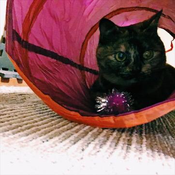 うちの猫さん_a0077632_14463550.jpg