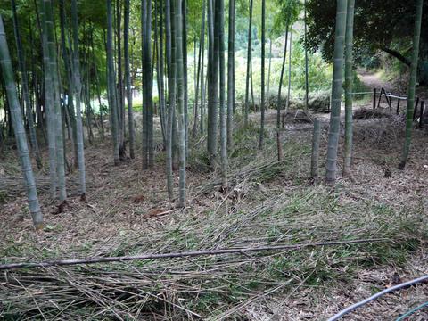 アズマネザサ刈り完了!10・28神奈川県所有竹林整備④_c0014967_11464872.jpg