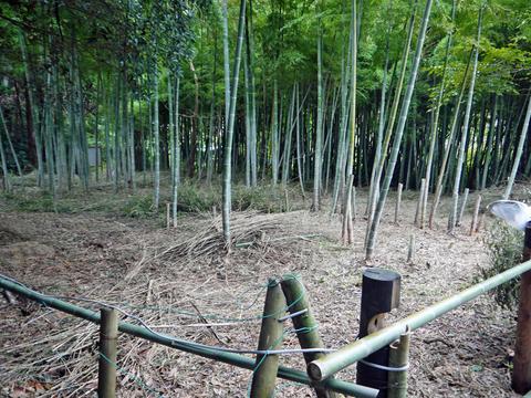 アズマネザサ刈り完了!10・28神奈川県所有竹林整備④_c0014967_11475765.jpg