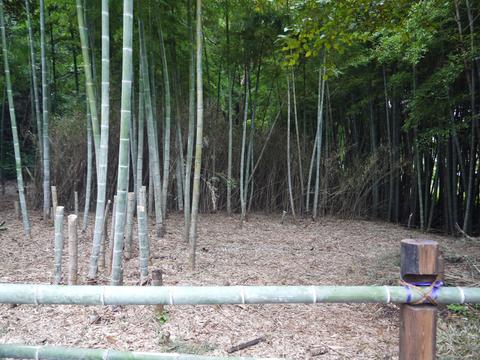 アズマネザサ刈り完了!10・28神奈川県所有竹林整備④_c0014967_1148546.jpg