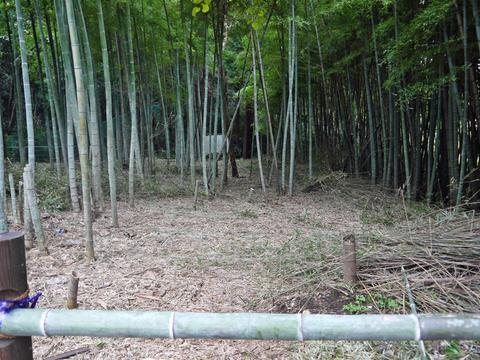 アズマネザサ刈り完了!10・28神奈川県所有竹林整備④_c0014967_1148991.jpg