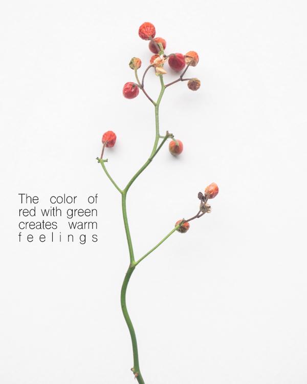 緑の枝に赤い実。_b0022268_18250781.jpg
