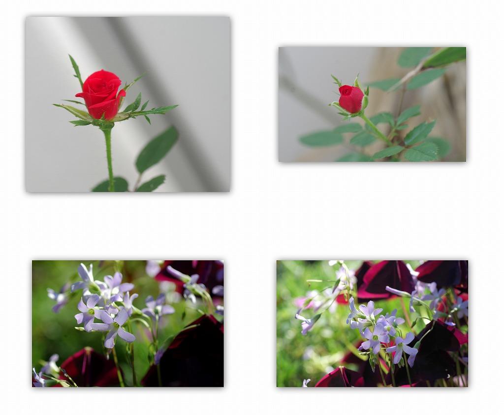 色づく桜の葉_d0147812_17311539.jpg