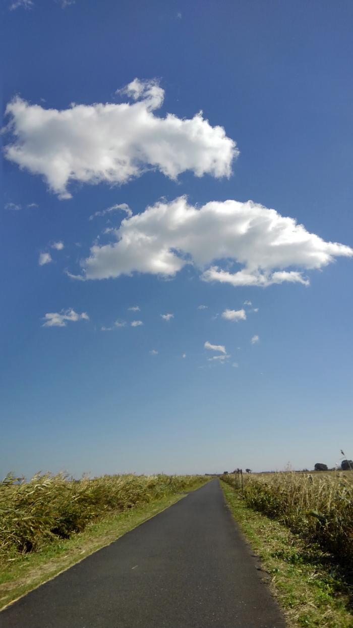 木枯らし1号が吹いた日(マガンが上空を飛んだ)_f0239515_1854077.jpg