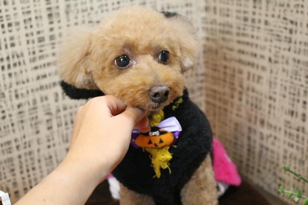 10月25日ご来店のわんちゃんです!!_b0130018_00364066.jpg