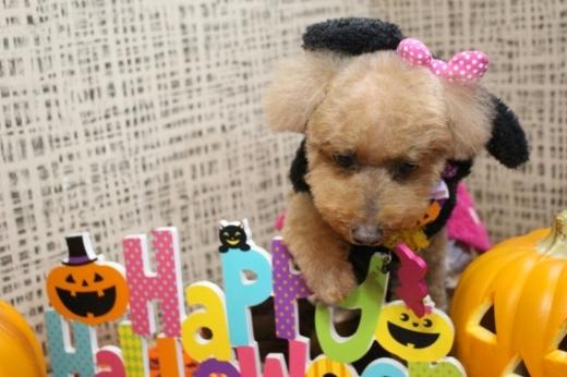 10月25日ご来店のわんちゃんです!!_b0130018_00364550.jpg