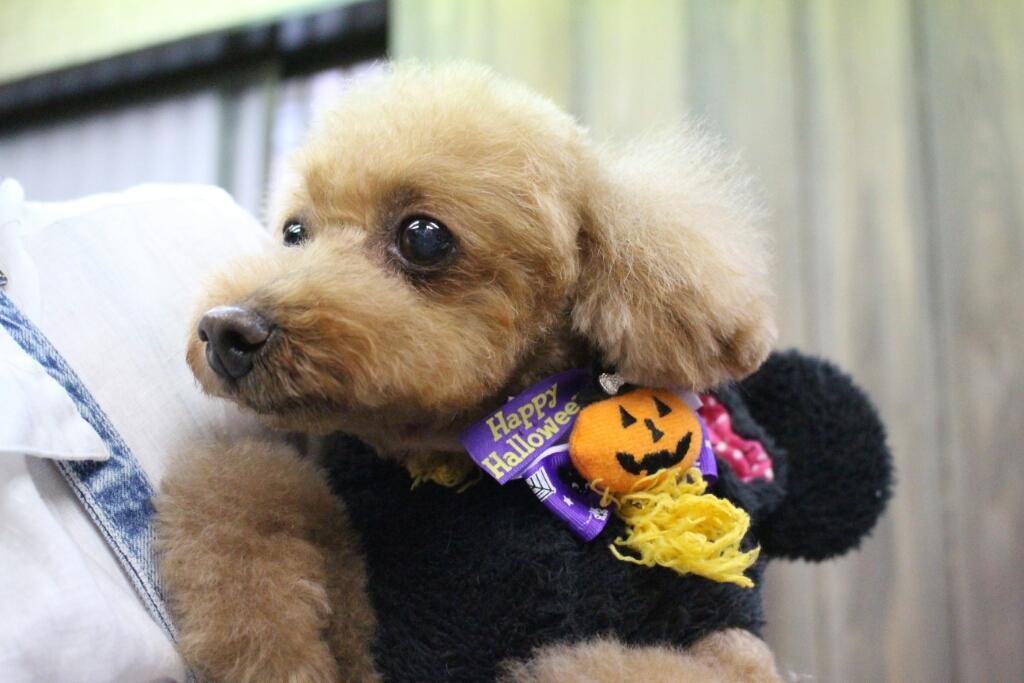 10月25日ご来店のわんちゃんです!!_b0130018_00364832.jpg