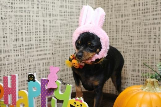 10月25日ご来店のわんちゃんです!!_b0130018_00393820.jpg