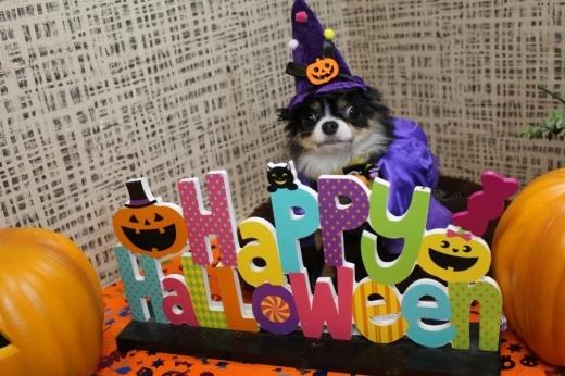 10月25日ご来店のわんちゃんです!!_b0130018_00444612.jpg