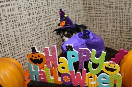 10月25日ご来店のわんちゃんです!!_b0130018_00444925.jpg