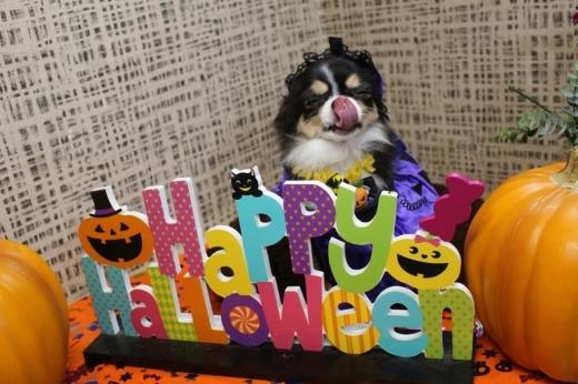 10月25日ご来店のわんちゃんです!!_b0130018_00445248.jpg