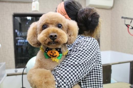 10月25日ご来店のわんちゃんです!!_b0130018_01051828.jpg