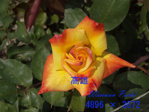 e0376329_08572202.jpg